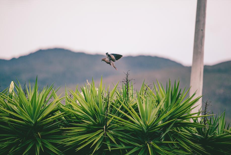 villa de leyva_birds