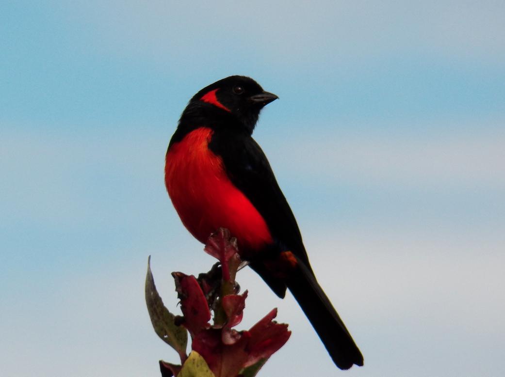 birdwatching - pnn chingaza